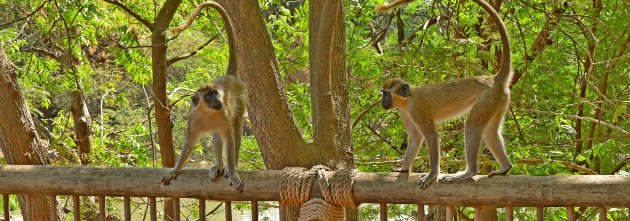 Excursion demi-journée - Réserve de Bandia