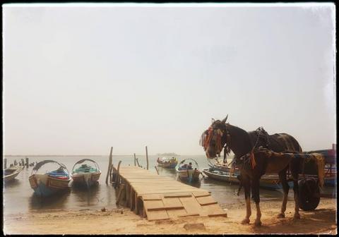 Image de l'excursion 31